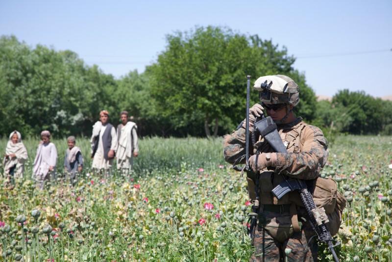 Потенциальное производство опиума в Афганистане выросло с 3300 до 4800 тонн в год