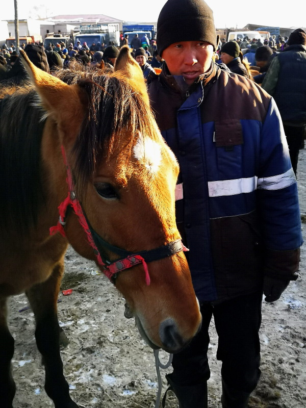 descendant-of-the-Przhewalsky-horse-at-the-Sunday-animal-market-in-Karakol-Inbox--e1576820656280
